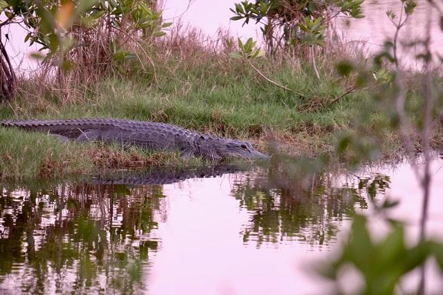 Le parc national des Everglades en Floride