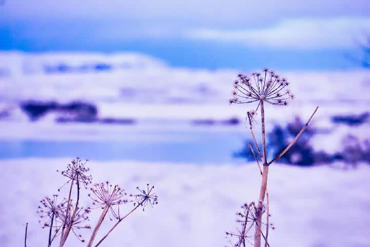 Le lac de Myvatn