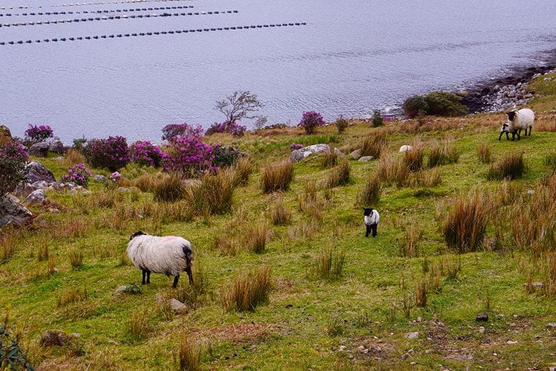 Killary Harbour Connemara