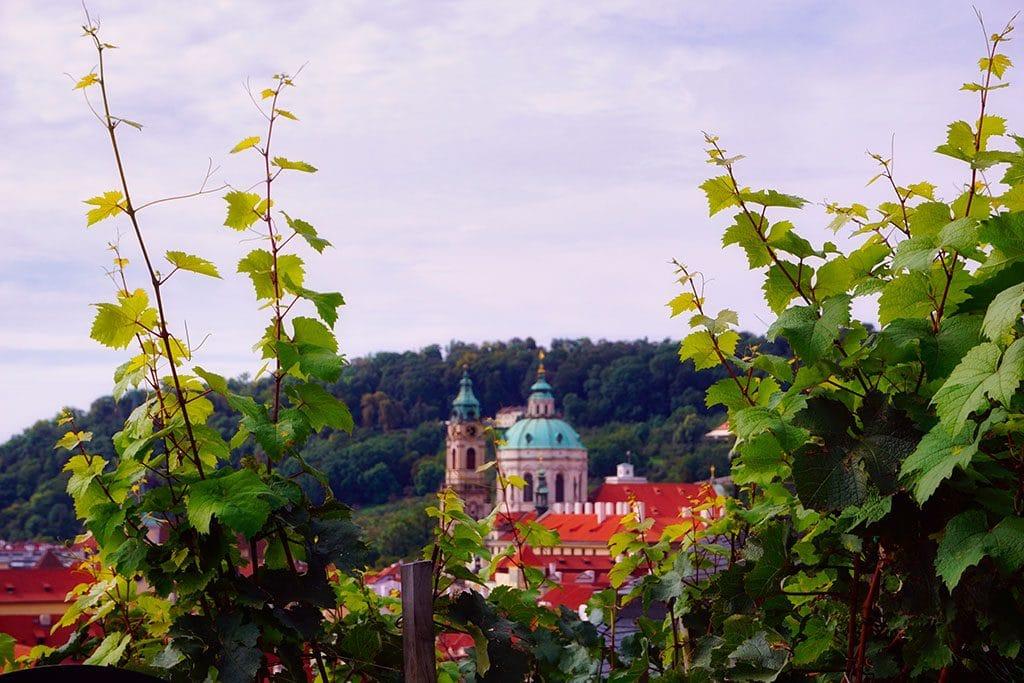 Le vignoble Saint Venceslas à Prague