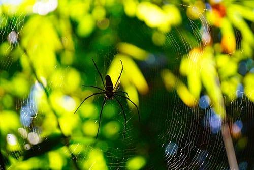 Araignée dans la jungle du parc national de Khao Sok en Thailande