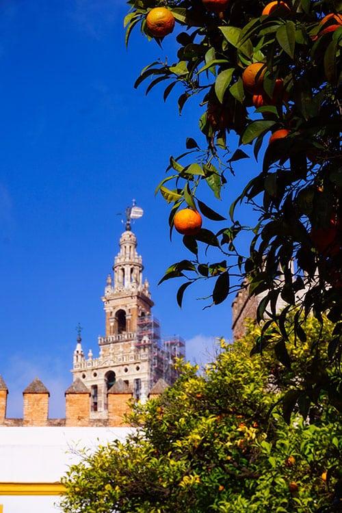 Le cathédrale vue depuis le quartier de Santa Cruz, le plus beau quartier de Seville en Espagne