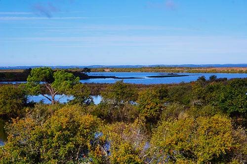 Photo de la Réserve Ornithologique du Teich