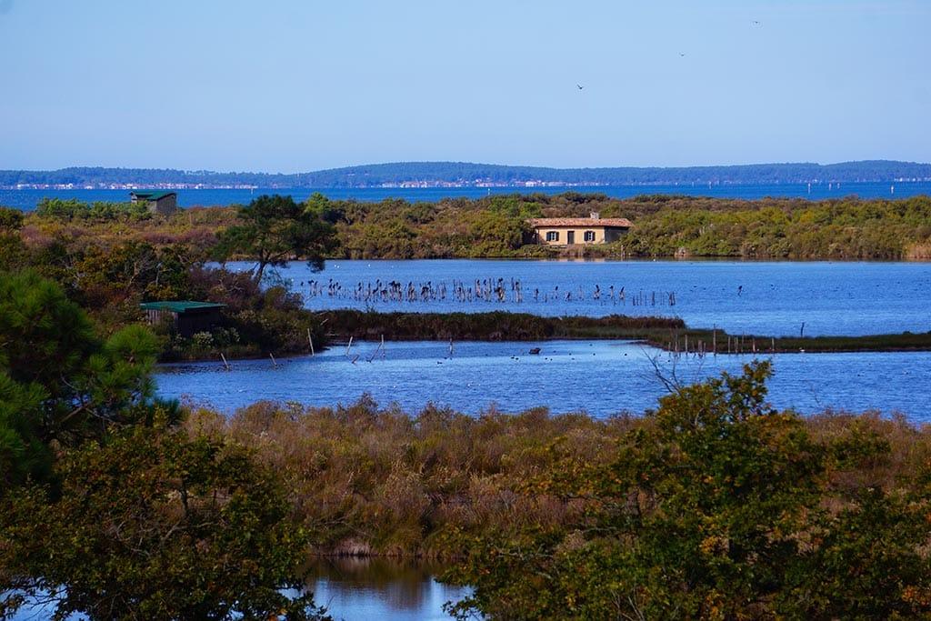 Image d'un étang à la réserve ornithologique du teich
