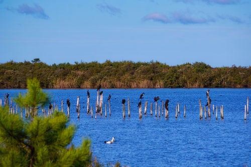 Photo d'un banc d'oiseaux dans la réserve ornithologique du Teich