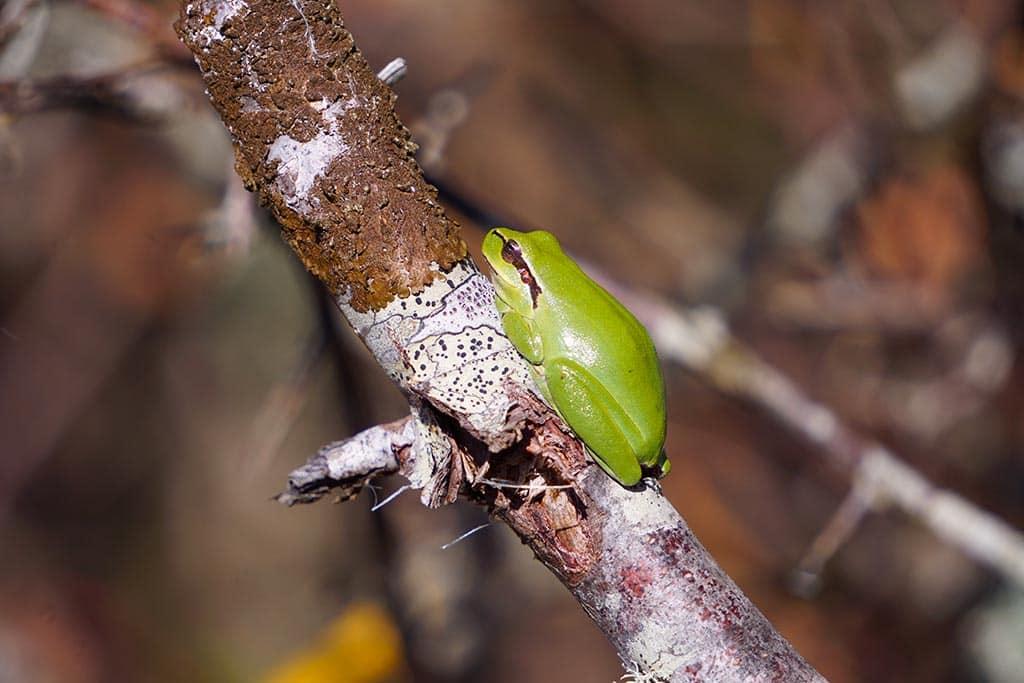 Photo d'une grenouille dans un arbre à la réserve ornithologique du teich