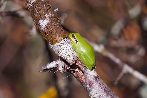 Photo d'une grenouille à la Réserve Ornithologique du Teich