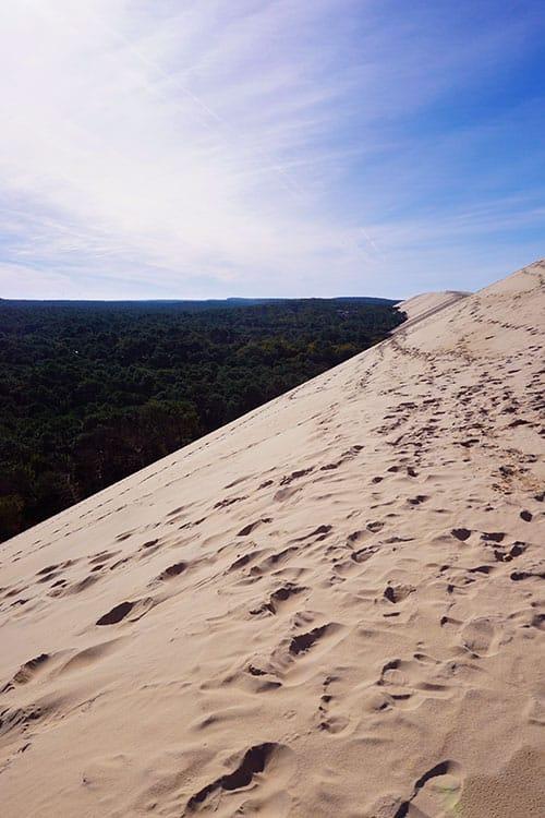 Image avec vue sur la forêt des landes depuis la dune du Pilat