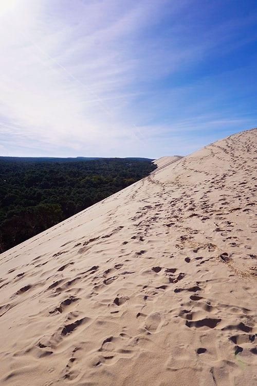 Image de la forêt des Landes face à la Dune du Pilat