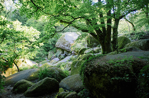 La forêt de Huelgoat dans le Finistère
