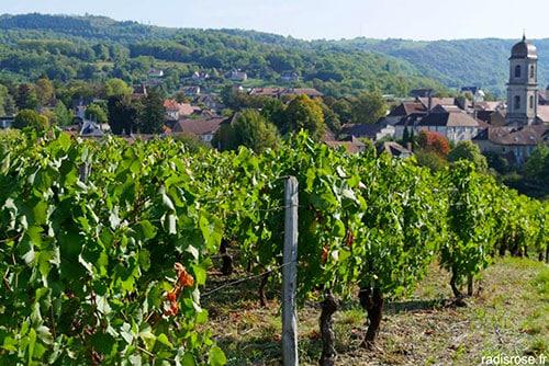 Vignoble dans le Jura