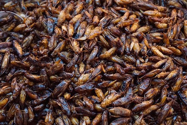 Photographie d'insectes au marché chinois de Chiang Mai
