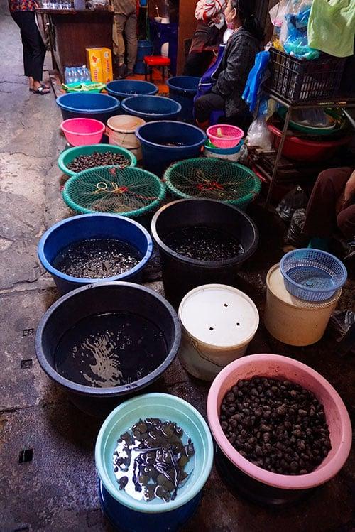 Photographie de sangsues et poissons au marché chinois