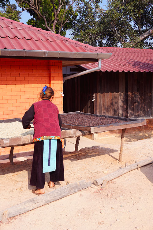 Photographie d'une femme Hmong tournant le café
