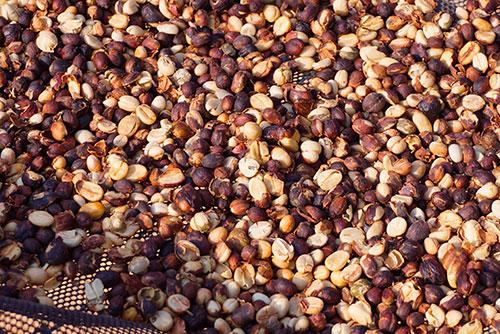 photographie des grains de café