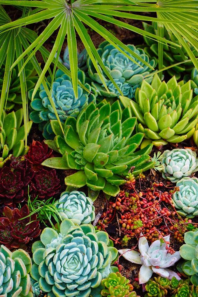 Photo des plantes du jardin botanique de Goteborg en Suede