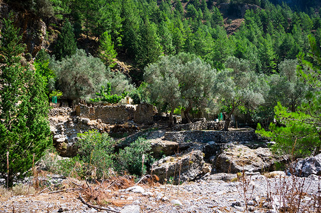 photographie des infrastructures de l'ancien village de Samaria