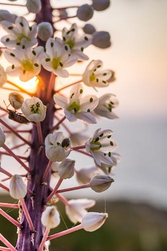 Photographie d'un coucher de soleil à Matala en Crète
