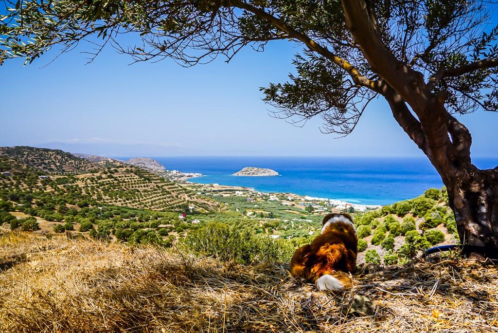 Photographie de la randonnée botanique dans les environs de Mochlos en Crète