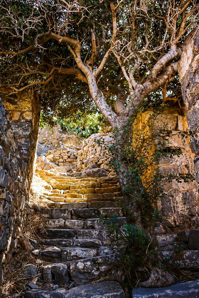 Photographie d'un arbre dans le village abandonnée de Spinalonga