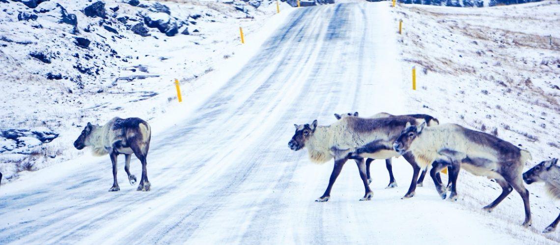 itinéraire road trip Islande
