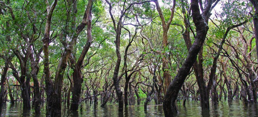 parc national des everglades